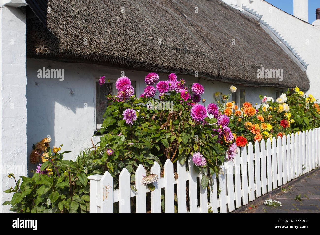 Churchtown, Merseyside. UK Weather. 19th September, 2017.  Sun-loving Dahlias, which keep flowering until the first - Stock Image