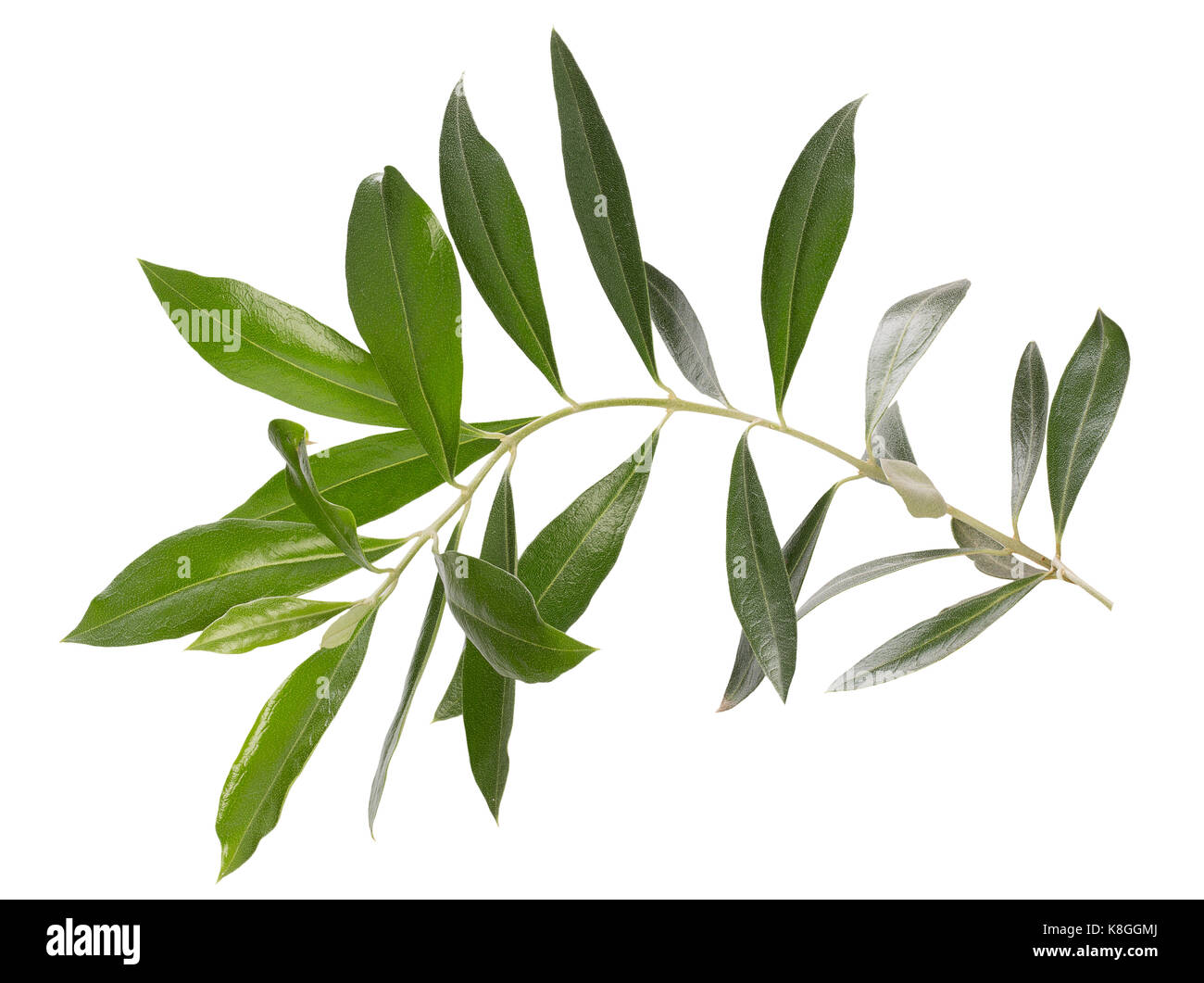 Olive Hand Drawn Stock Photos & Olive Hand Drawn Stock Images - Alamy