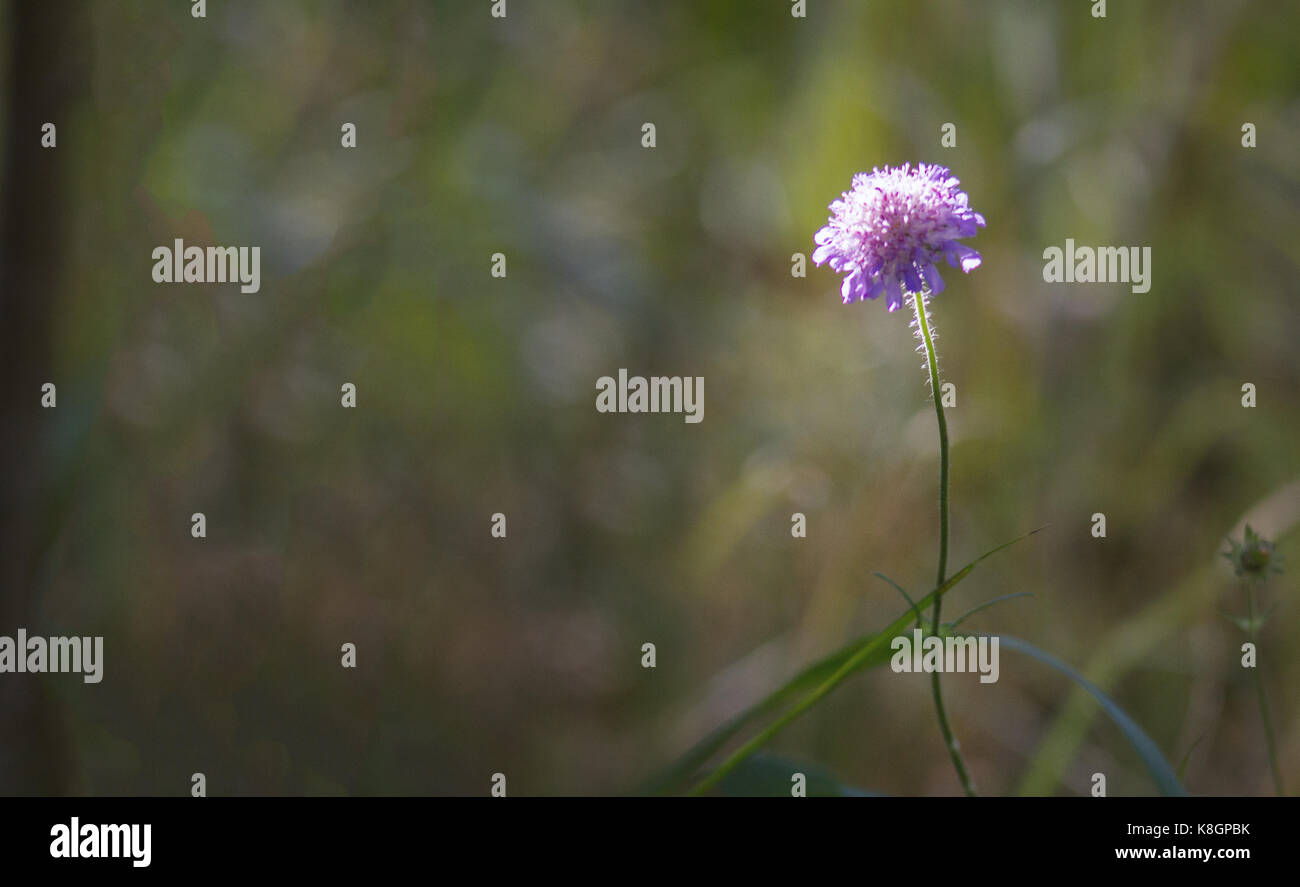 Lonely flower in forest - soft focus Stock Photo