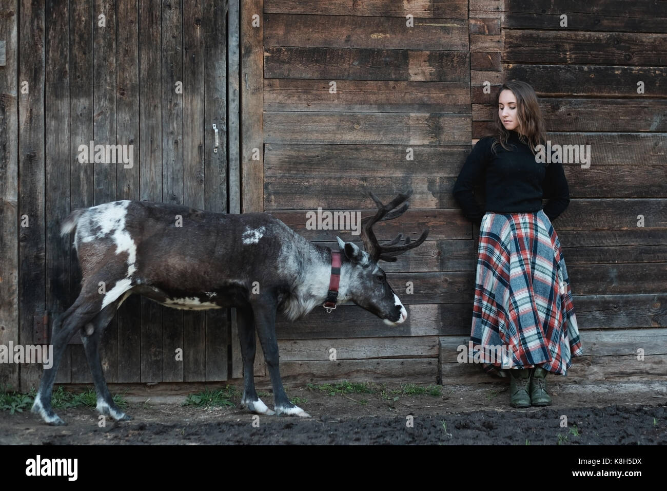 A young European girl in a plaid skirt is standing next to a reindeer near a wooden wall. - Stock Image