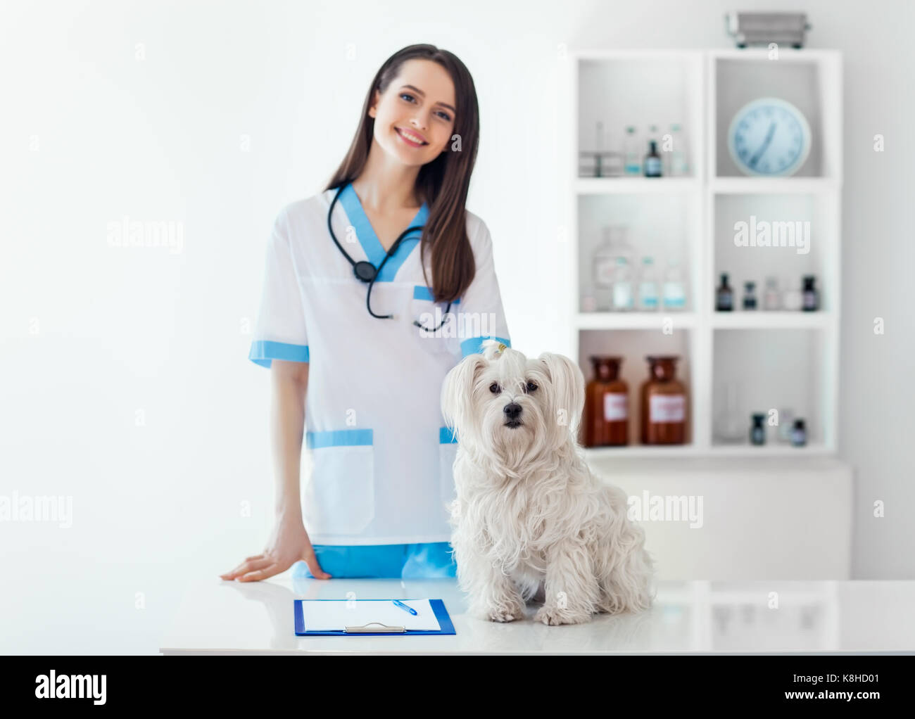 Beautiful smiling veterinarian doctor and cute white dog in vet clinic. Pet care - Stock Image
