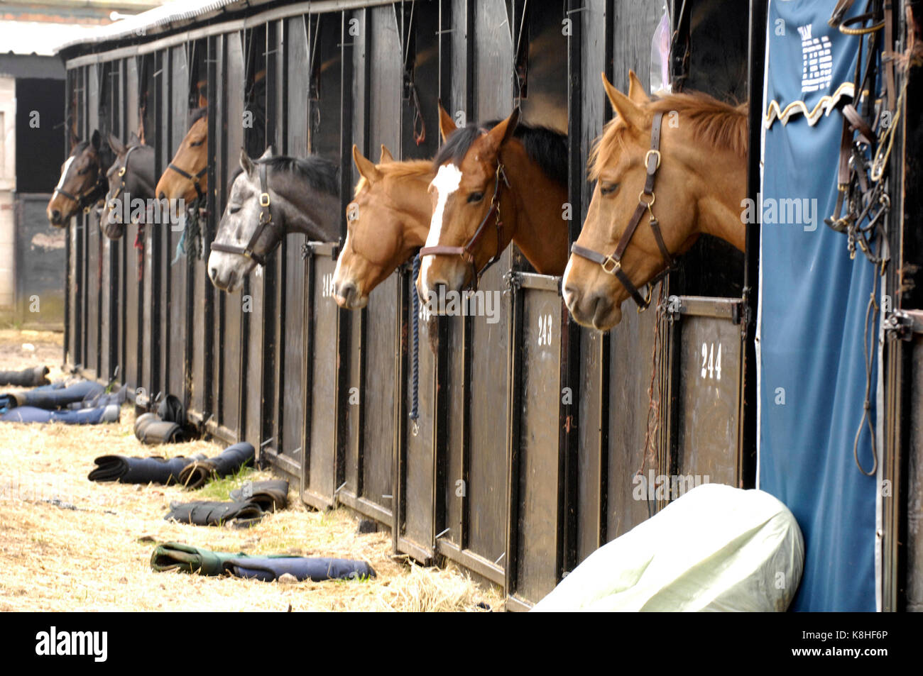 Stables at David grooms yard in Chepstow wales with a row of horses with their heads sticking out or looking out - Stock Image