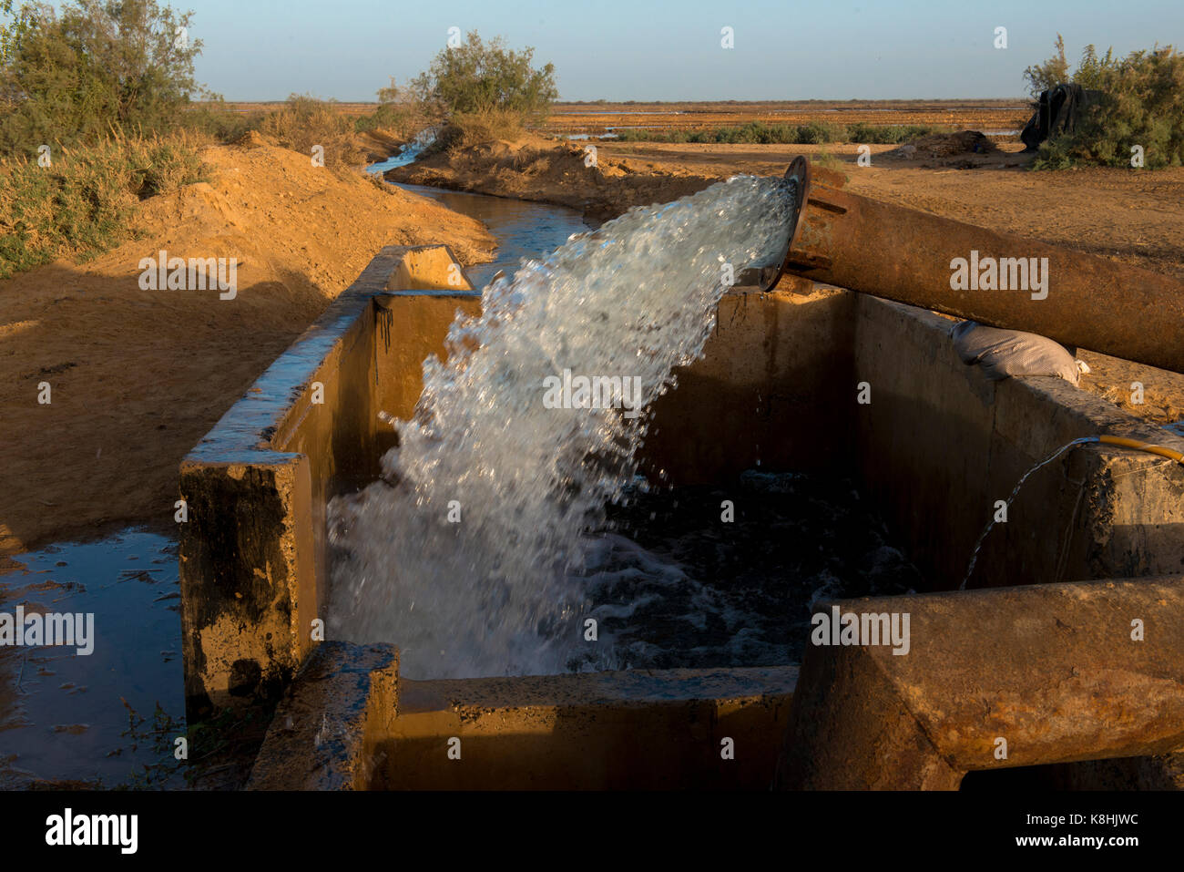 Rice field irrigation. senegal. - Stock Image