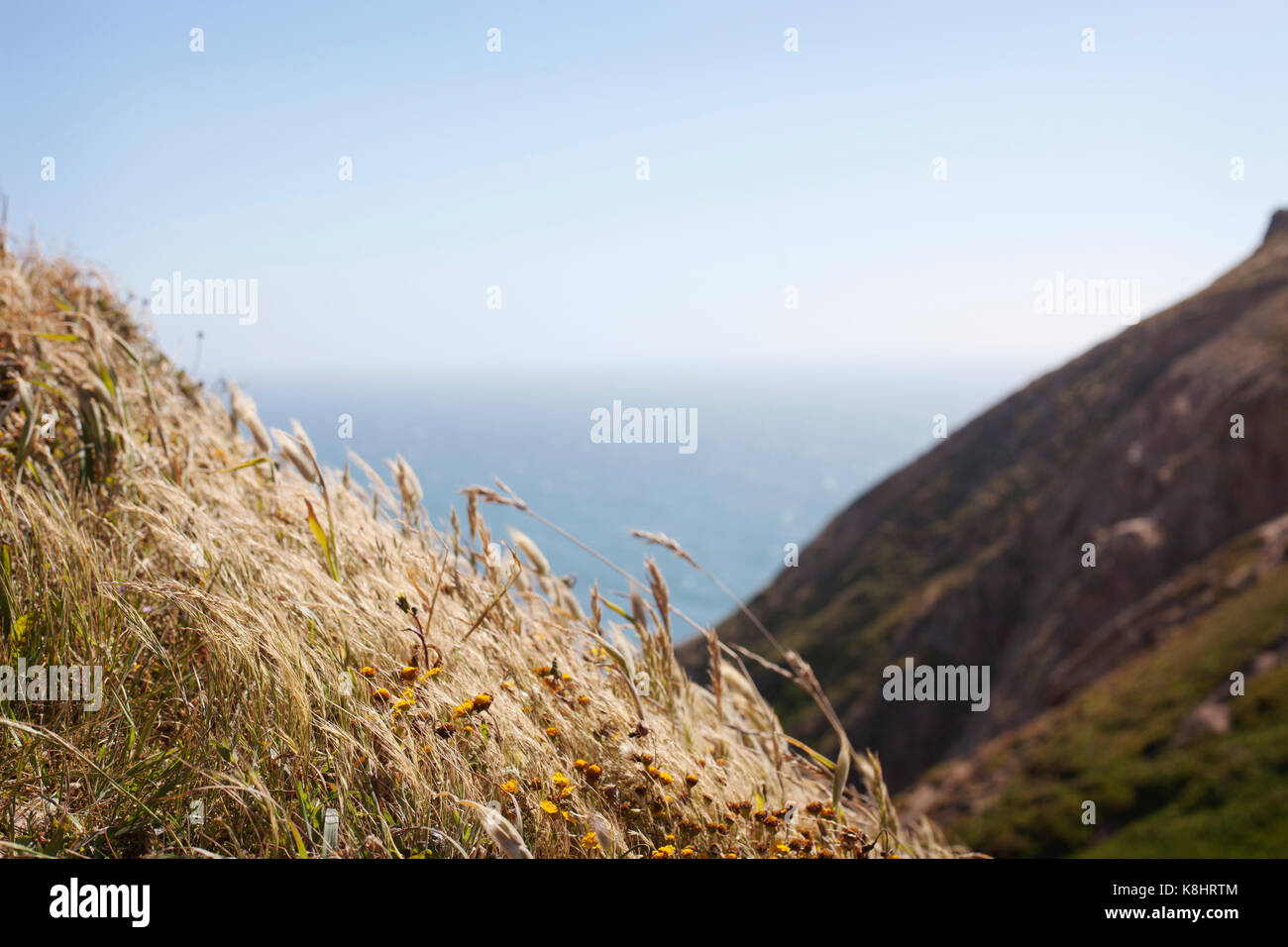 Dried plants against sea and sky - Stock Image