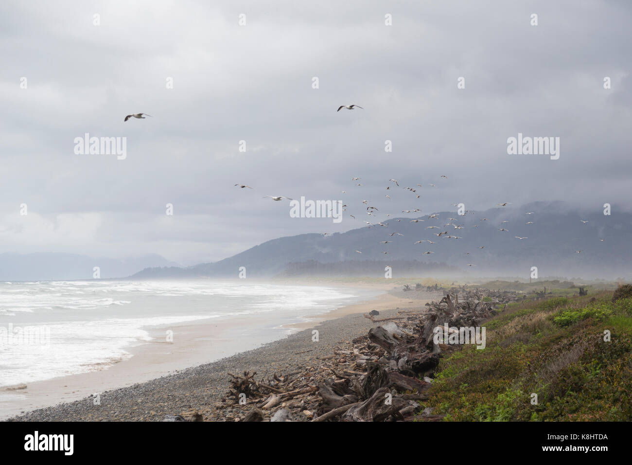 Scenic view of birds flying over beach against cloudy sky Stock Photo