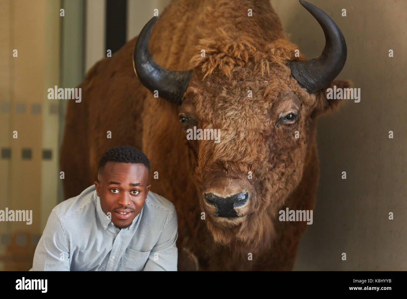 Breeding bull animal and student of agronomy or agriculture - Stock Image