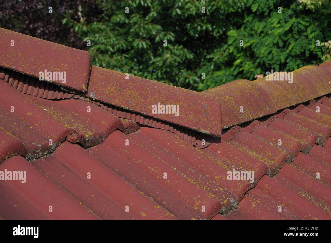 Lichen Roof Tiles Stock Photos Amp Lichen Roof Tiles Stock