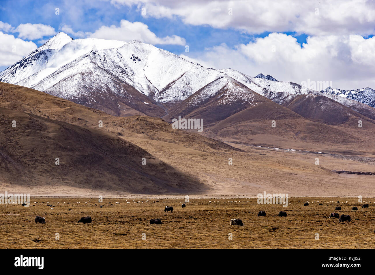 Typical mountain landscape with tibetan yaks - Tibet - Stock Image