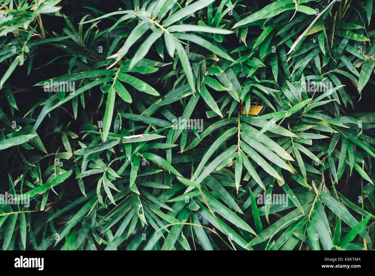 image of a leaves with a nice colour ( selective focus ) - Stock Image