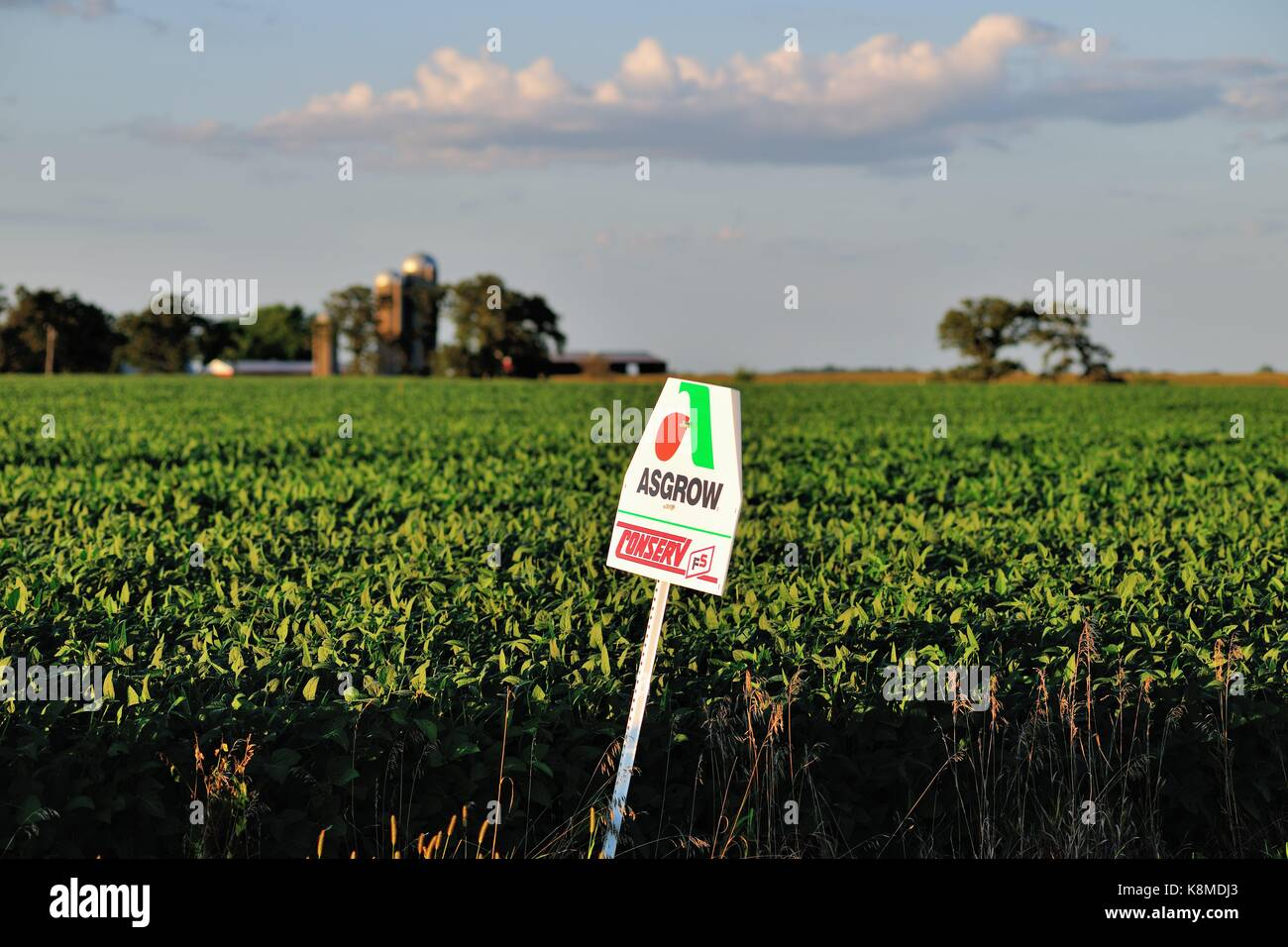 An isolated, lone feed/seed sign along a rural dirt road in Illinois farm country, near Sandwich, Illinois, USA. - Stock Image