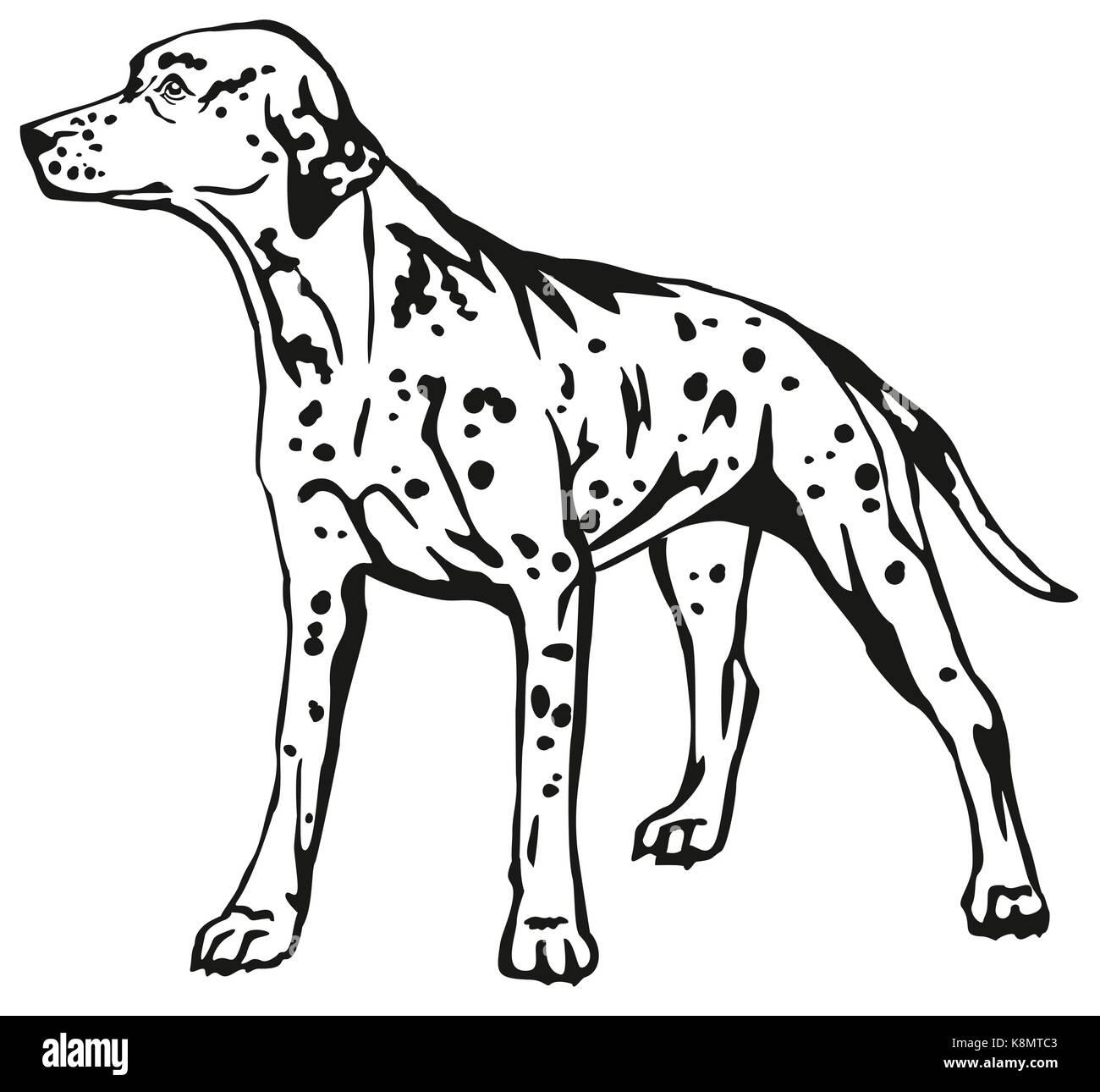 Decorative contour portrait of standing in profile Dalmatian, vector isolated illustration in black color on white - Stock Vector