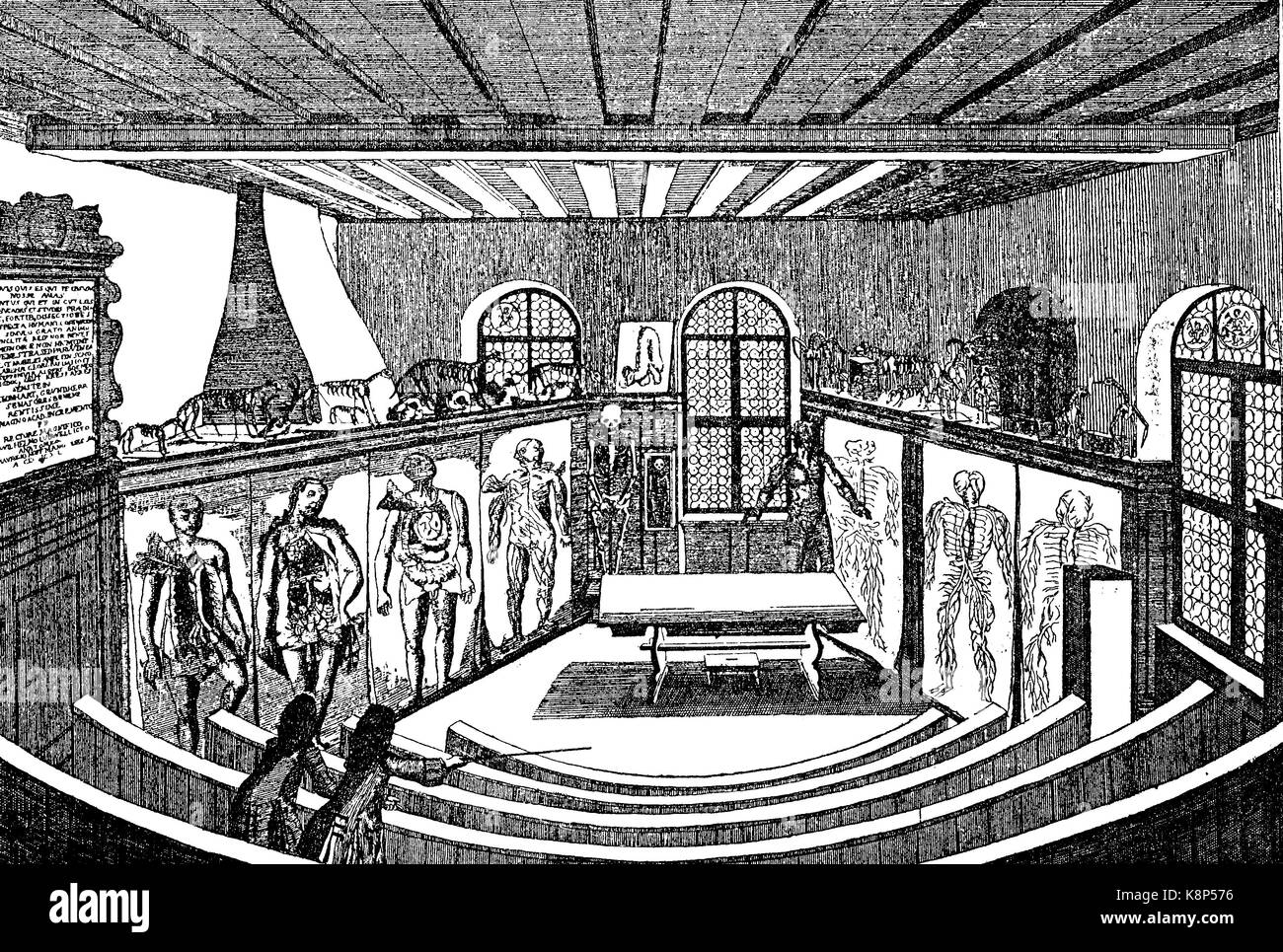 Anatomical theater in the university, Anatomisches Theater in der Universität Altdorf, Deutschland, 1750, digital - Stock Image
