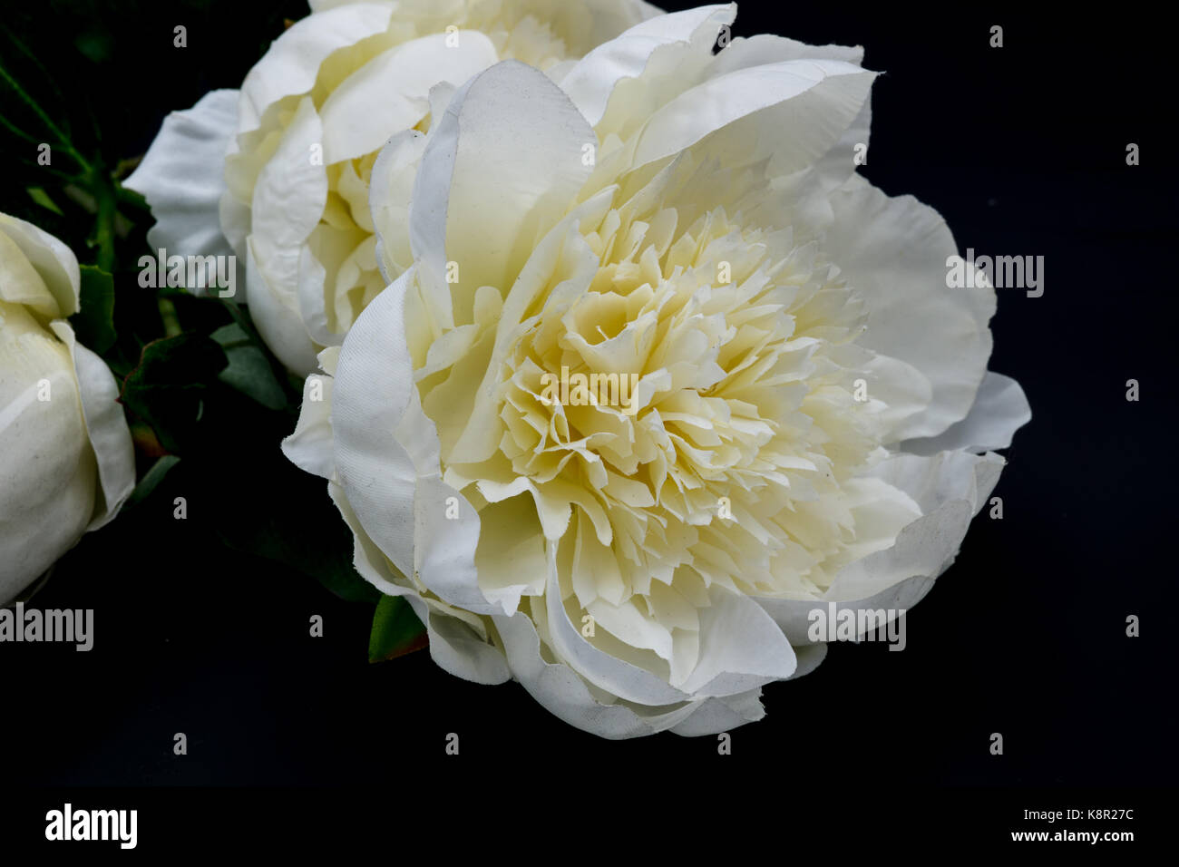 Big White Flower Petals Stock Photos Big White Flower Petals Stock