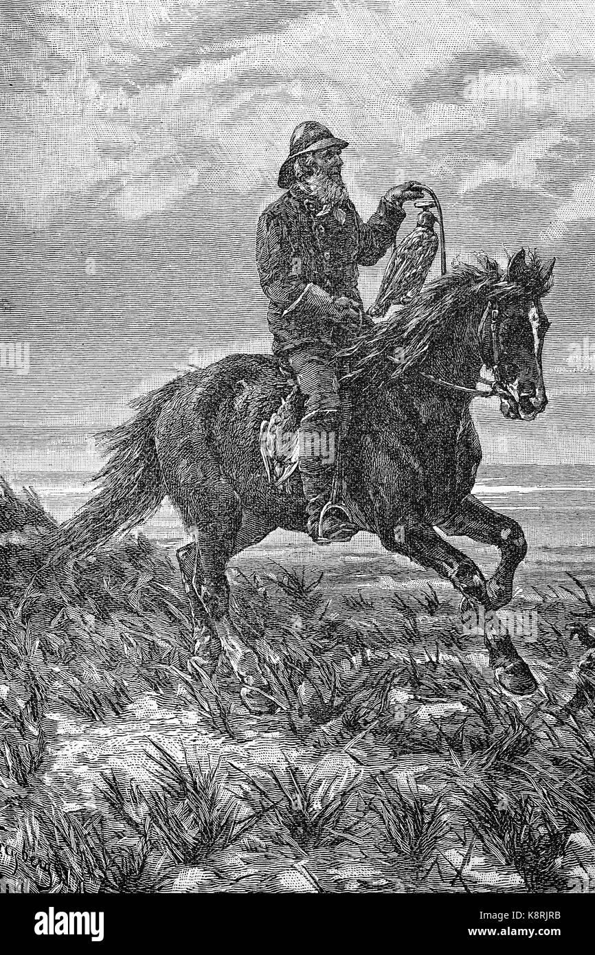 Hunting with the falcon, hunters on horseback, Texel Island, Holland, Jagd mit dem Falken, Jäger auf dem Pferd, - Stock Image