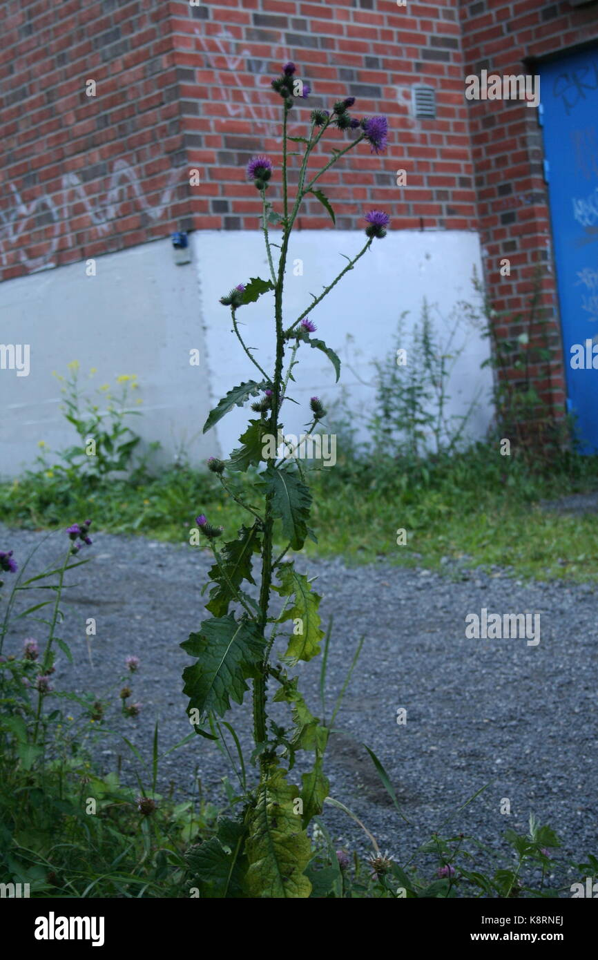 Unsorted plant images (Work in progress) - Stock Image