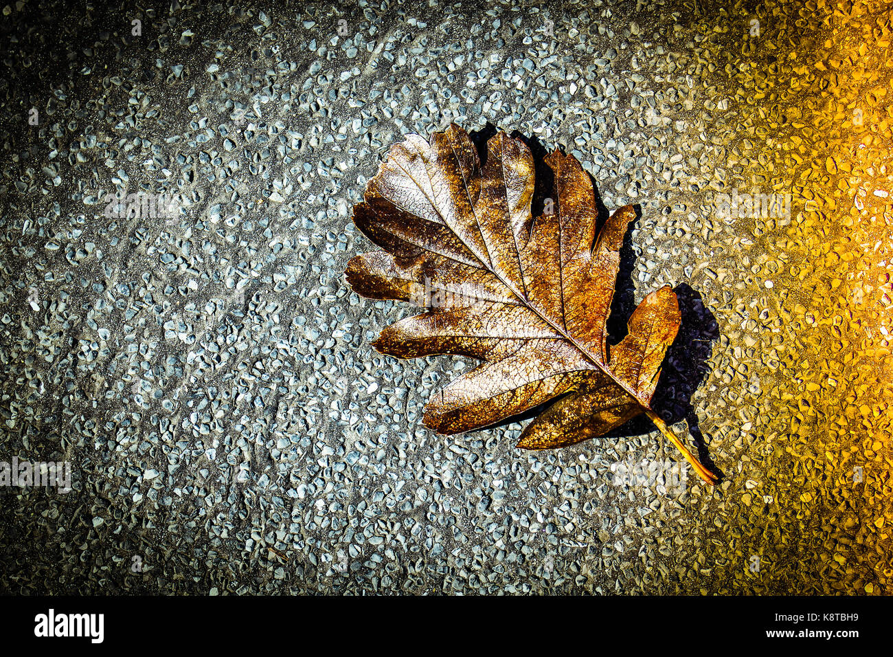 brown leaf resting on tarmac pavement Stock Photo