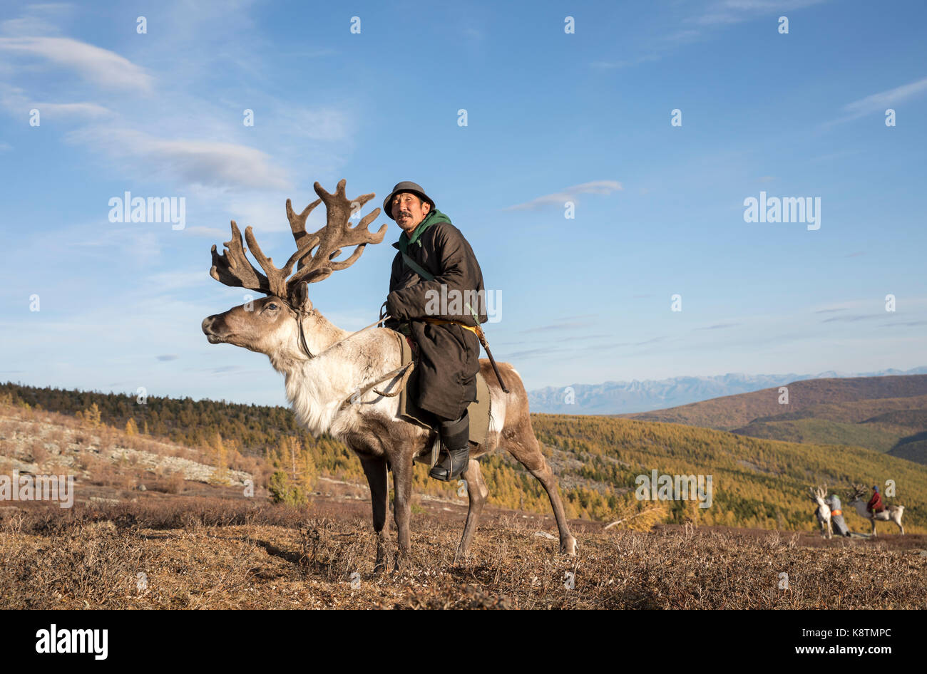 tsaatan man, dressed in a traditional deel, with his reindeers in a taiga of northern Mongolia - Stock Image