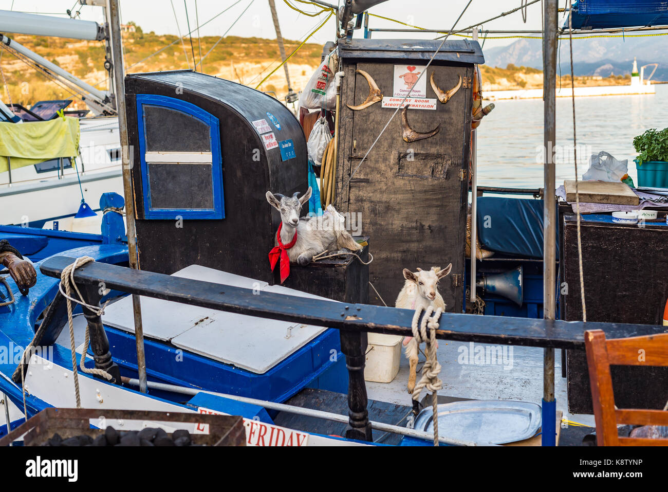 Samos island, Greece - September 18, 2016: Two goat on Fishing boat at Pythagorion/Pythagoreio Stock Photo
