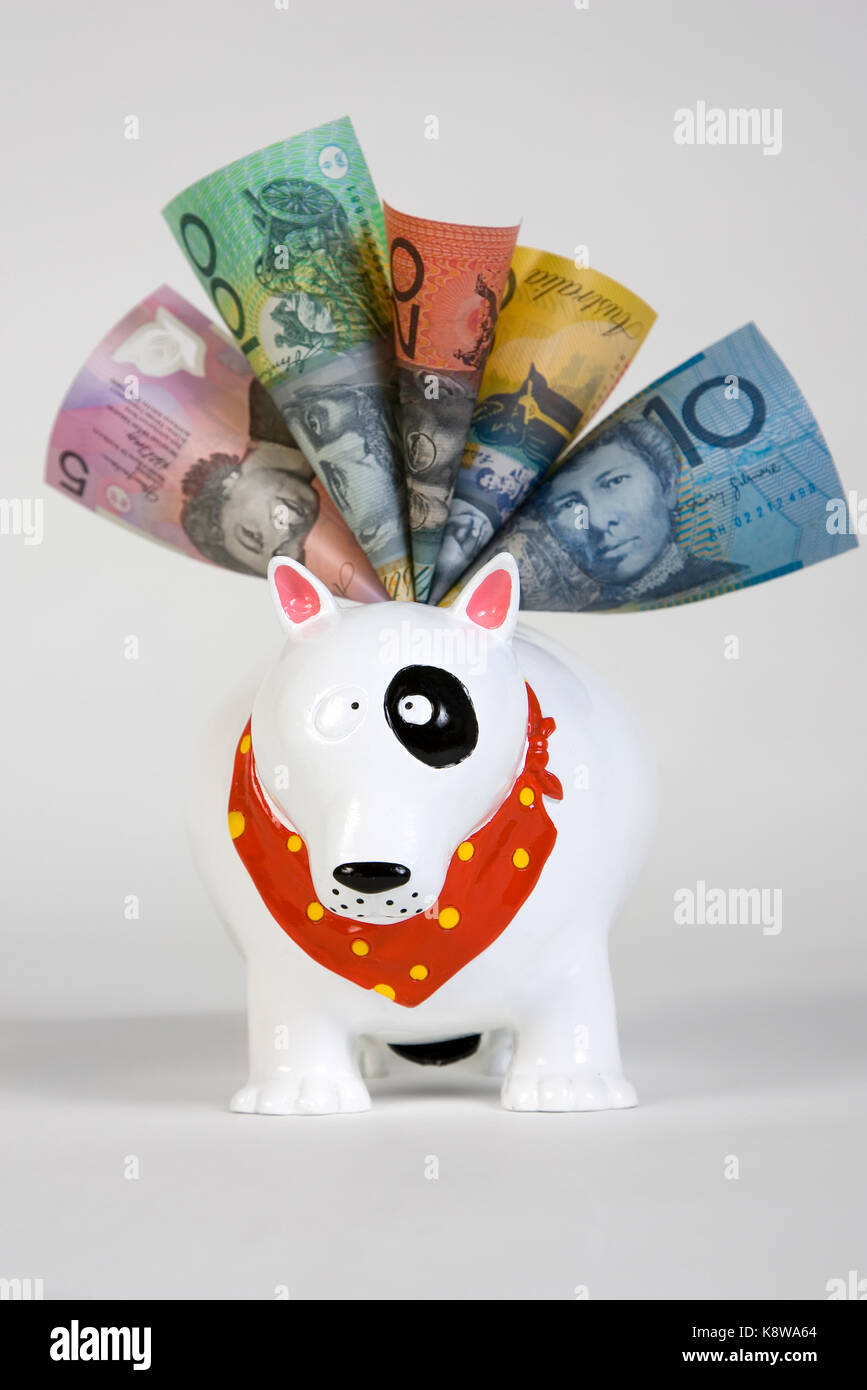 Australian banknotes in doggie bank - Stock Image