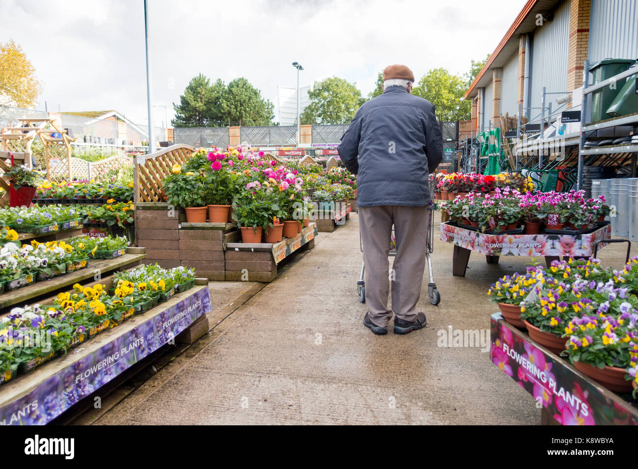 Elderly retired male man walking with a shopping trolley in the garden section in full bloom at the popular DIY - Stock Image