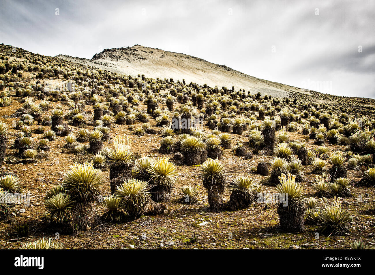 High altitude vegetation in Sierra de La Culata National Park, and Pico Pan de Azucar in the background. Merida, - Stock Image