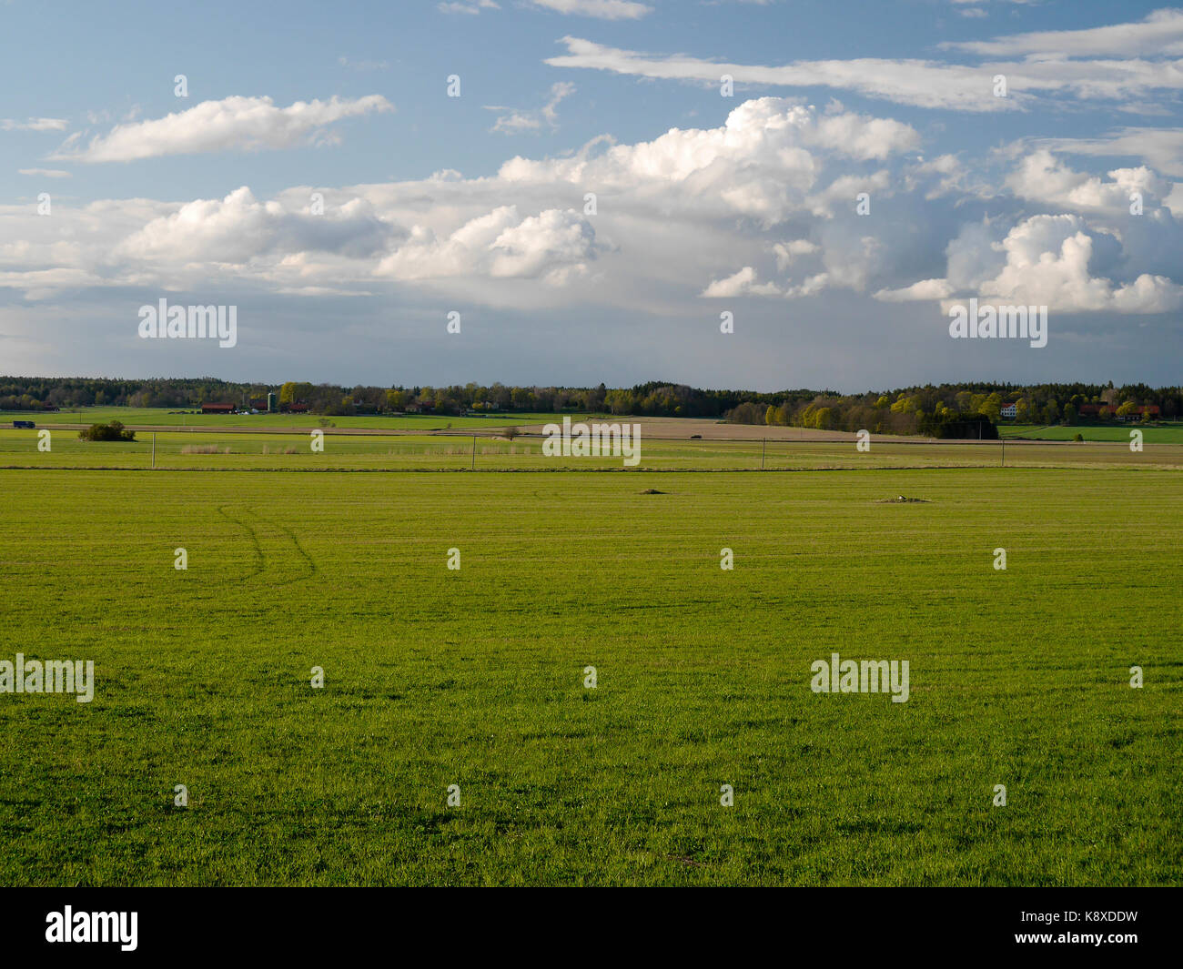 Green grass, blue skyes and some summer Clouds outside of Knivsta, South of Uppsala in Sweden. - Stock Image
