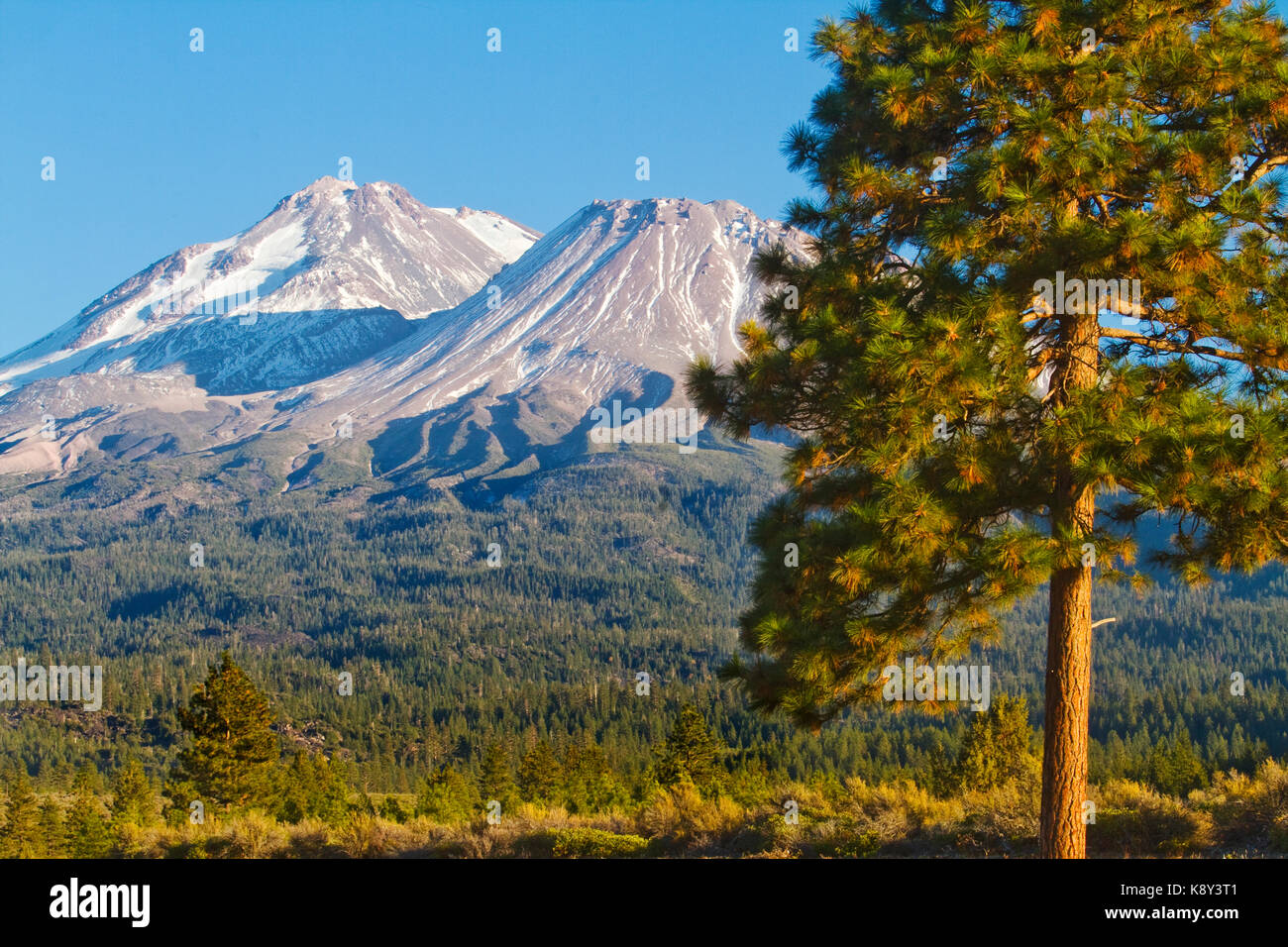 USA, California, Mount Shasta - Stock Image