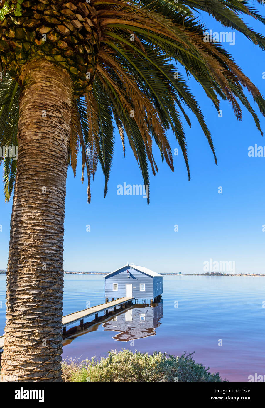 Palm tree framed Crawley Edge Boatshed also known as the Blue Boat House on the Swan River in Matilda Bay, Crawley, - Stock Image