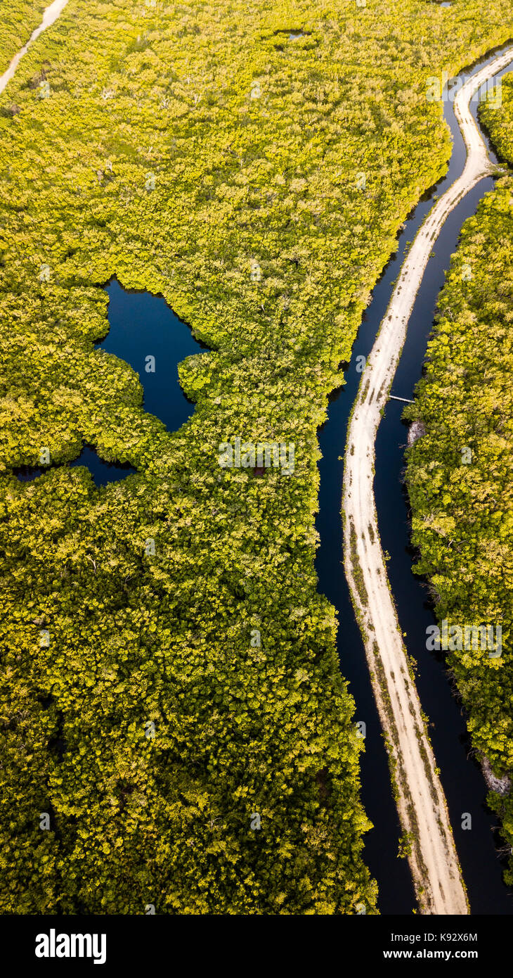 Aerial view of a dirt road running through flooded mangrove forest Stock Photo