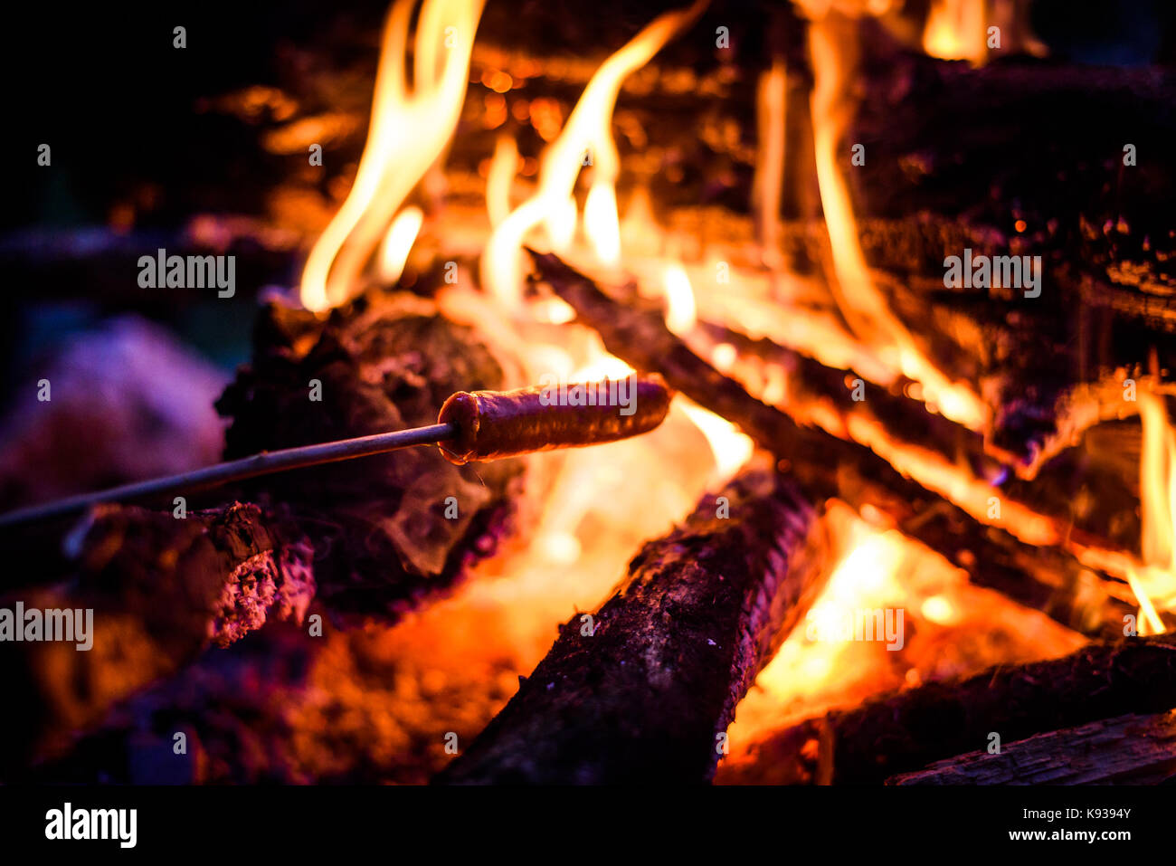 Making and cooking Hot dog sausages over open camp fire. Grilling food over flames of bonfire on wooden branch Stock Photo
