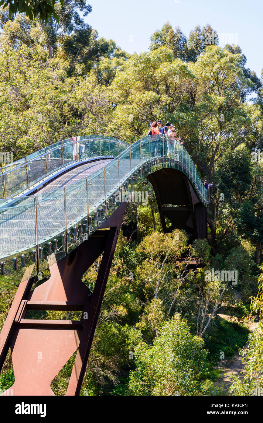 People on the Kings Park Lotterywest Federation Walkway Bridge, Perth, Australia - Stock Image