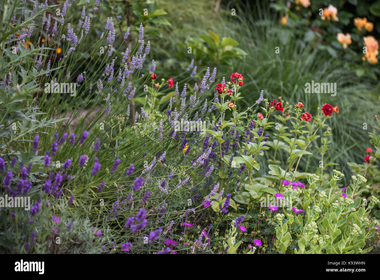 garden flowers, perennials, Hamburg, Germany - Stock Image