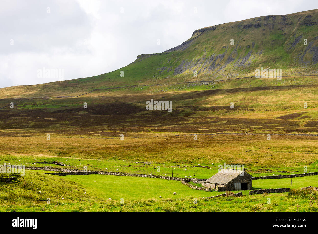 Pen-yGhent near Horton in Ribblesdale Yorkshire Dales National Park Yorkshire England United Kingdom UK - Stock Image