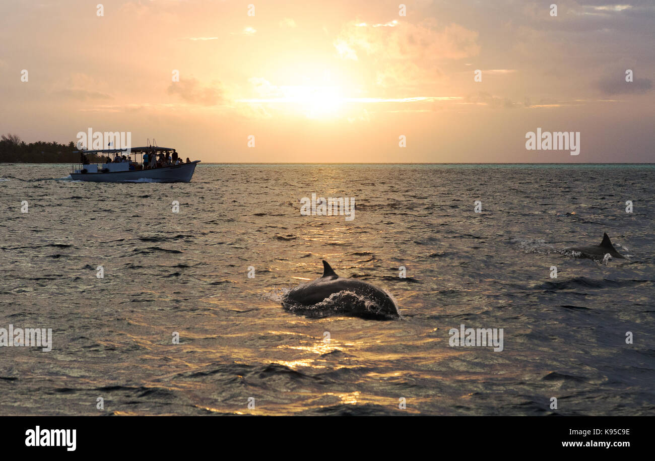 the Maldives - Tourists dolphin watching at sunset on a dolphin cruise, the Indian Ocean; the Maldives, Asia - Stock Image