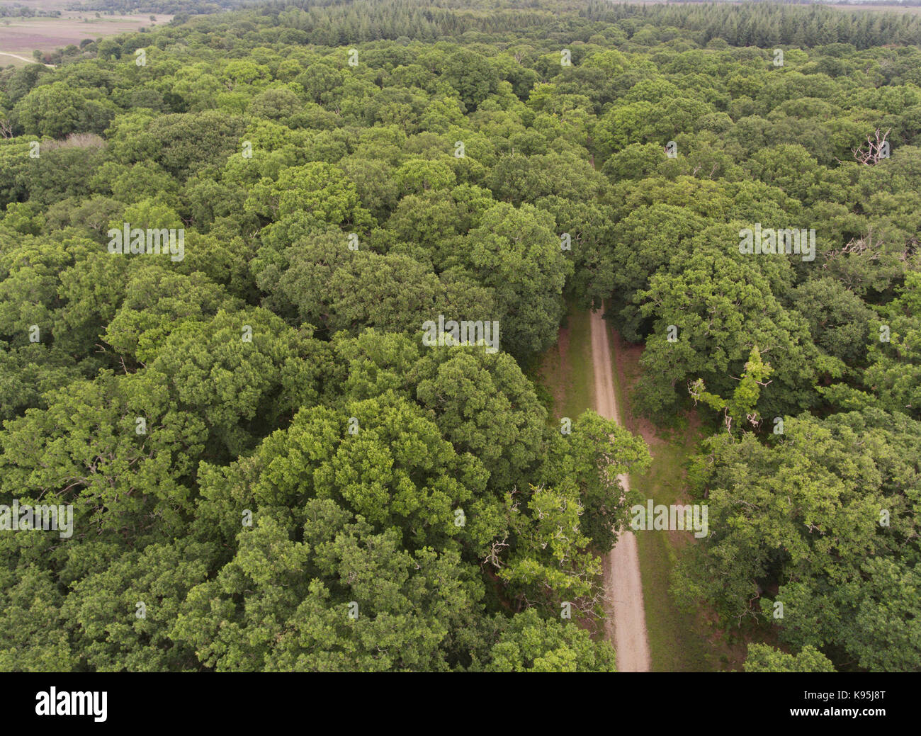 Aerial view of a walking path in the middle of green oak woodland in New Forest, United Kingdom . - Stock Image