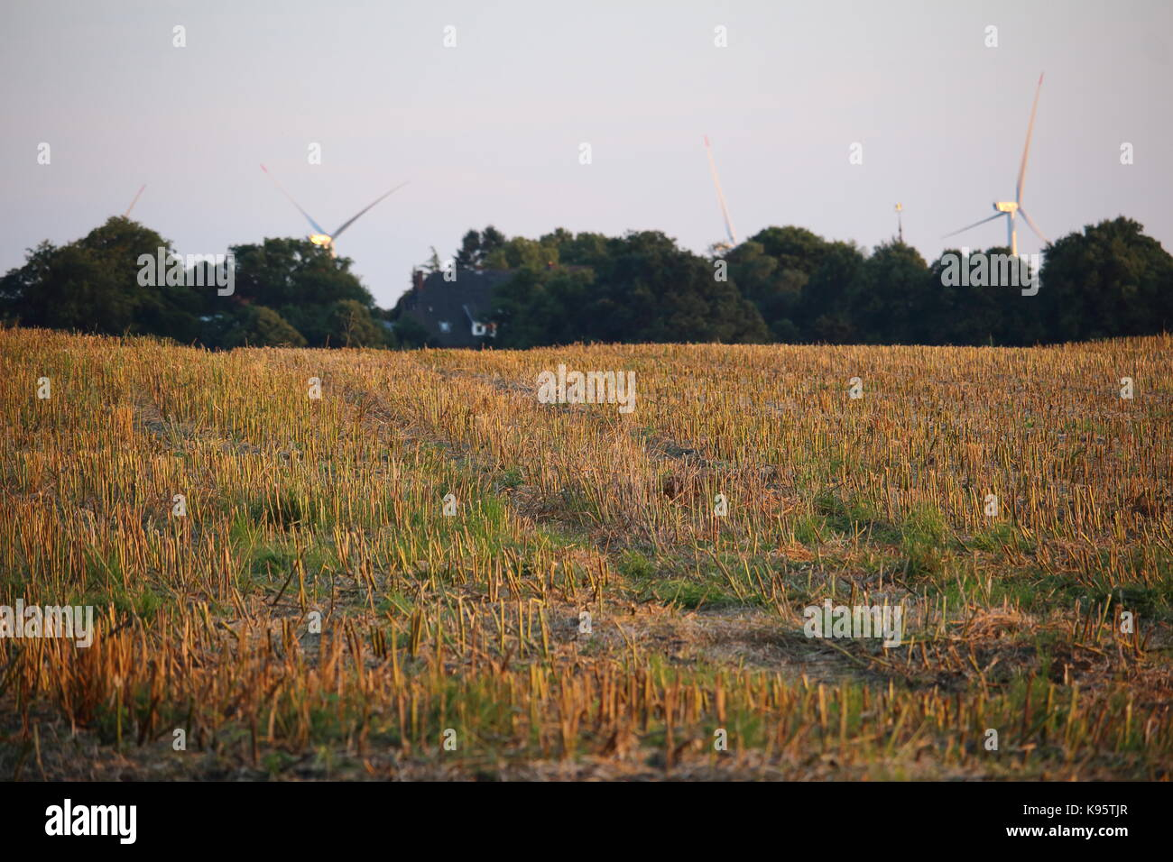 Field in the evening sun - Stock Image