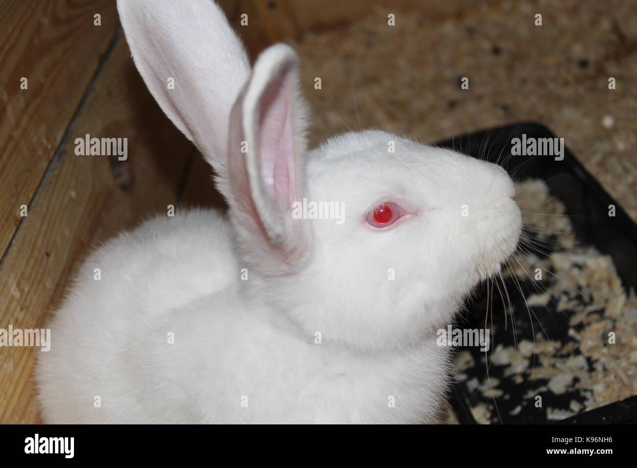 Animals - Stock Image