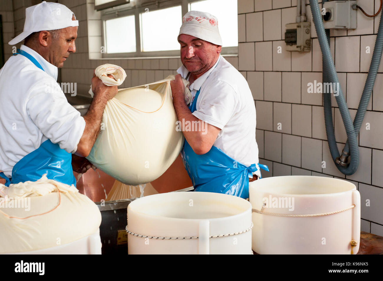 Workers lift a wrapped cheese from a tank before encasing it in a 'fascera' mould during the Parmigiano - Stock Image