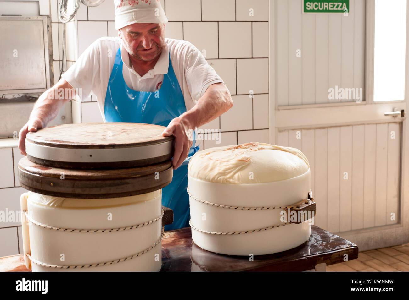 Workers encase the wrapped cheese in a 'fascera' mould during the Parmigiano-Reggiano cheese manufacturing - Stock Image