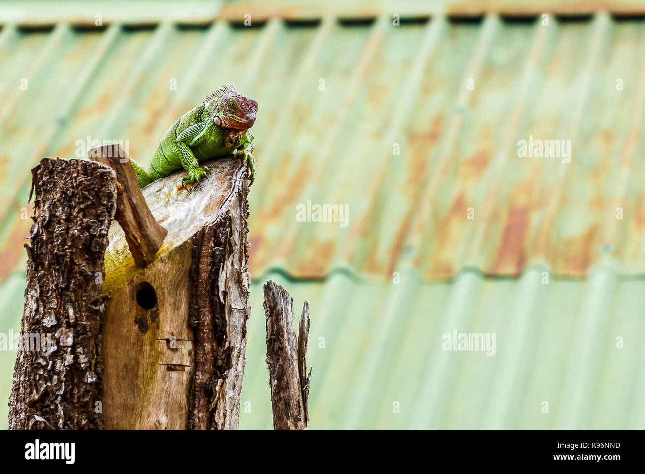 Metal Lizard Stock Photos & Metal Lizard Stock Images - Alamy