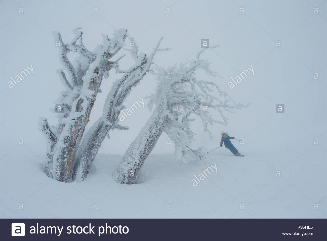 A teen girl skiing in foggy, whiteout conditions near rime covered trees. - Stock Image