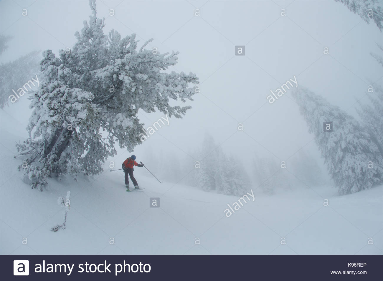 A teen boy skiing in foggy, whiteout conditions near rime covered conifer trees. - Stock Image