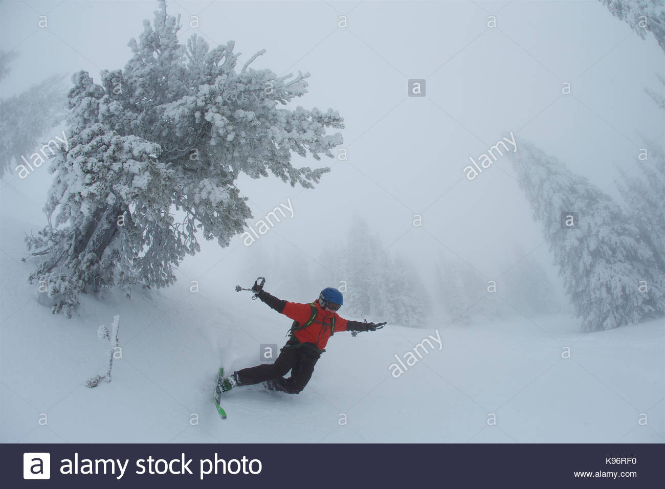 A teen boy falls while skiing in foggy, whiteout conditions near rime covered conifer trees. - Stock Image