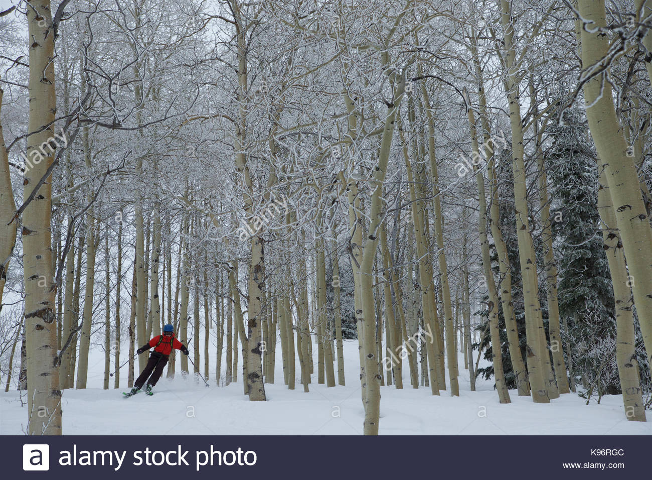 A teen boy downhill skiing through the trees on a stormy day. - Stock Image