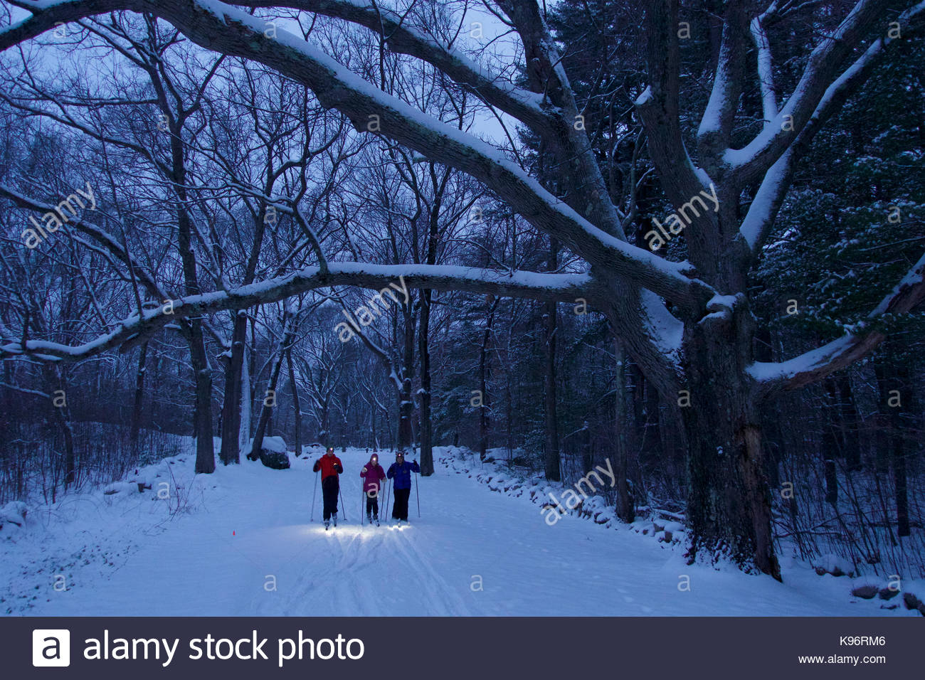 A woman and her teen daughter and son cross-country ski beneath fresh snow covered trees in twilight with headlamps - Stock Image