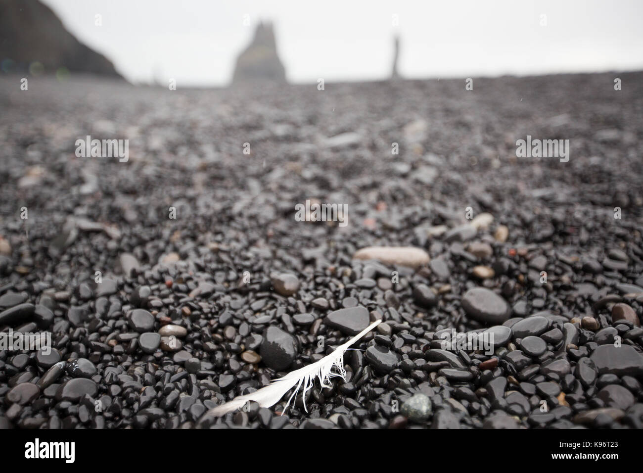 A lone feather rests on a black pebble beach. - Stock Image
