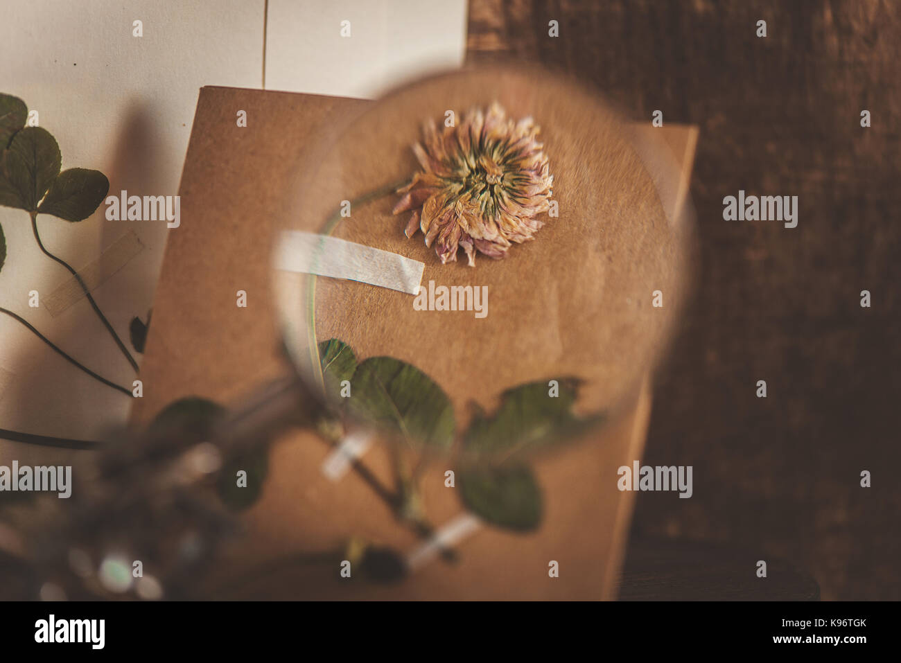 Warm still life with a clover under a magnifying glass, books, scissors, dried plants, moss and craft paper envelopes - Stock Image