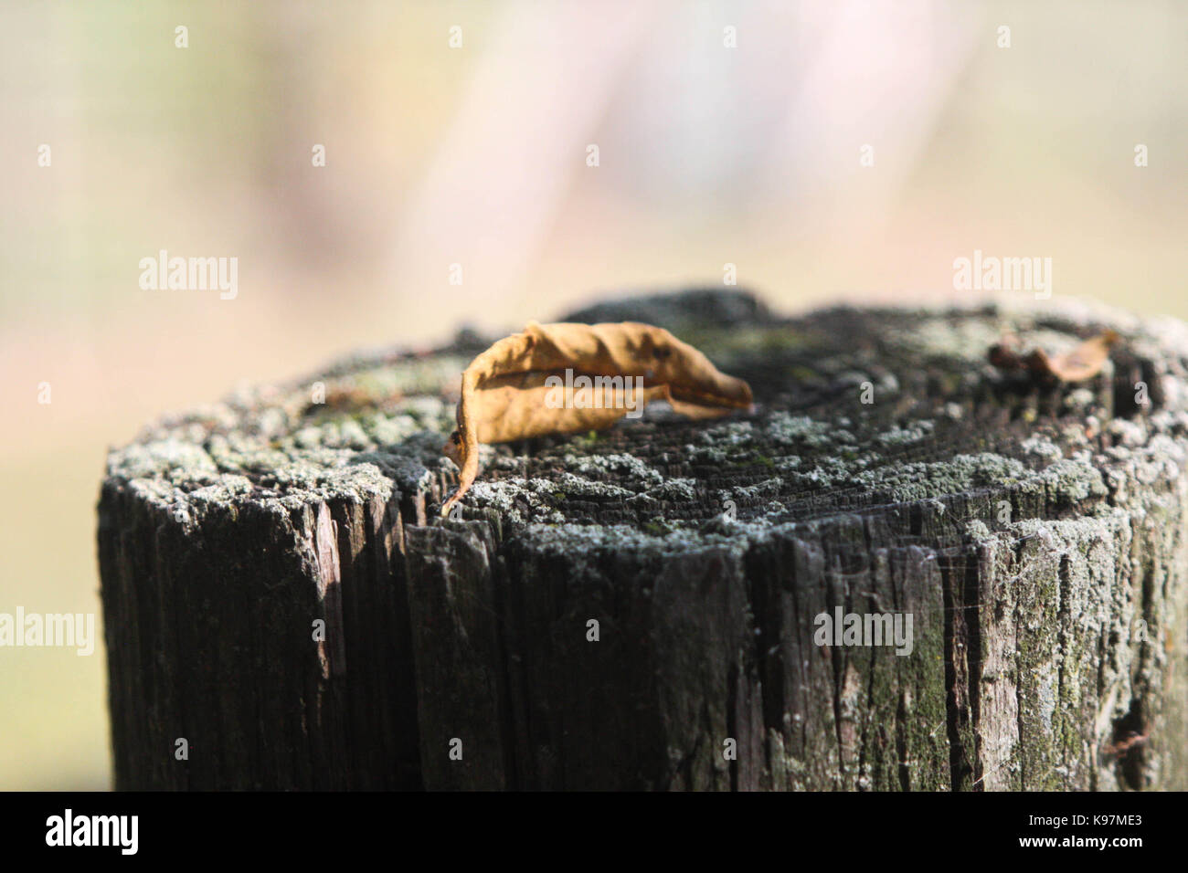 Leaf on a stump. Stock Photo