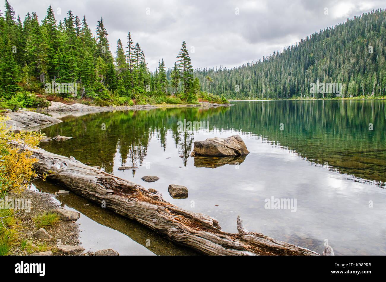 Driftwood and reflections, Lake helen MacKenzie, Strathcona, Canada - Stock Image