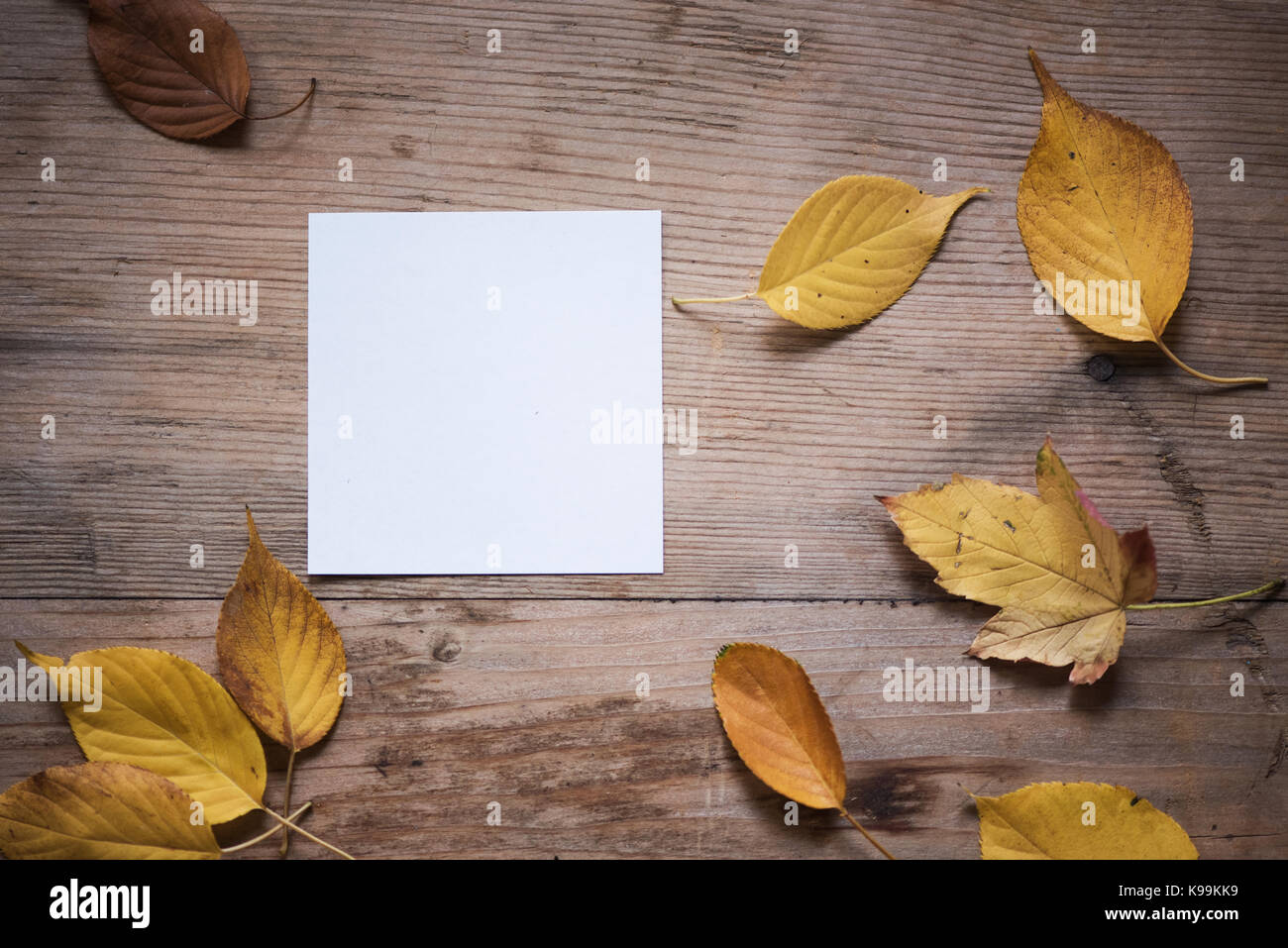 Autumn background with maple leaves on old woods Stock Photo